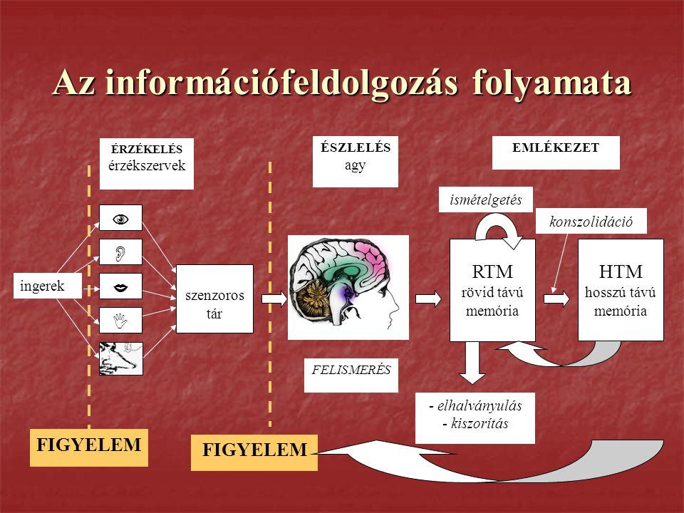 Az információfeldolgozás folyamata     ÉRZÉKELÉS érzékszervek ingerek FIGYELEM ÉSZLELÉS agy szenzoros tár RTM rövid távú memória HTM hosszú távú m