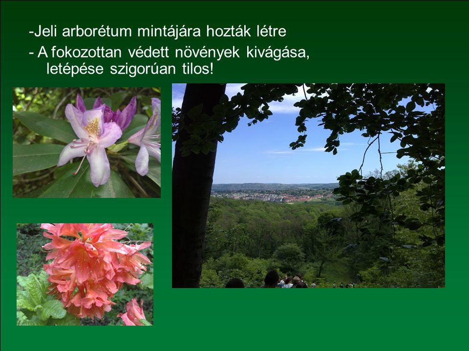 -Jeli arborétum mintájára hozták létre - A fokozottan védett növények kivágása, letépése szigorúan tilos!