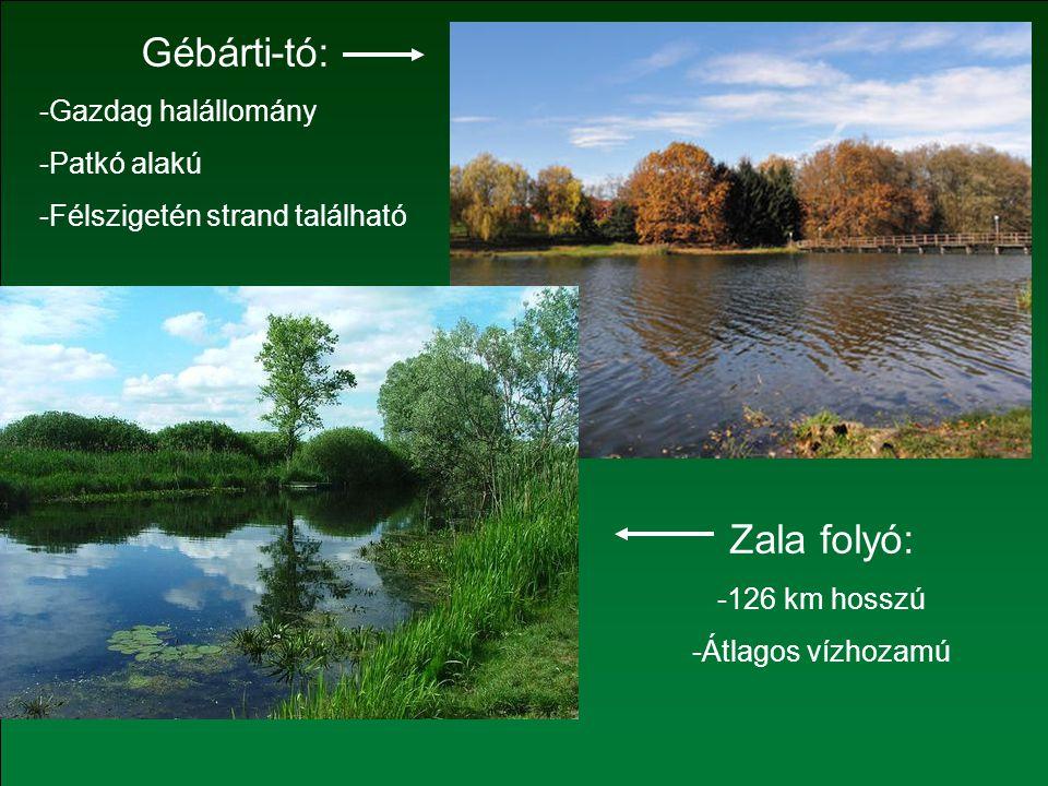Zala folyó: -126 km hosszú -Átlagos vízhozamú Gébárti-tó: -Gazdag halállomány -Patkó alakú -Félszigetén strand található