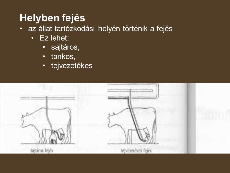 Helyben fejés az állat tartózkodási helyén történik a fejés Ez lehet: sajtáros, tankos, tejvezetékes