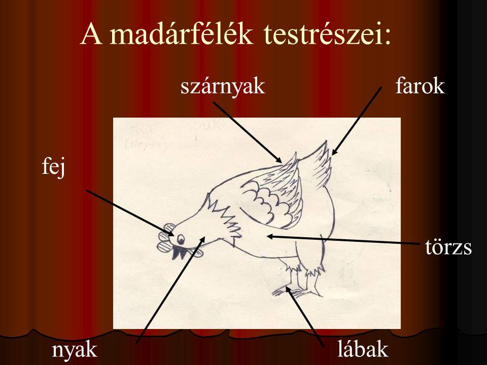 fej nyak szárnyakfarok törzs lábak A madárfélék testrészei: