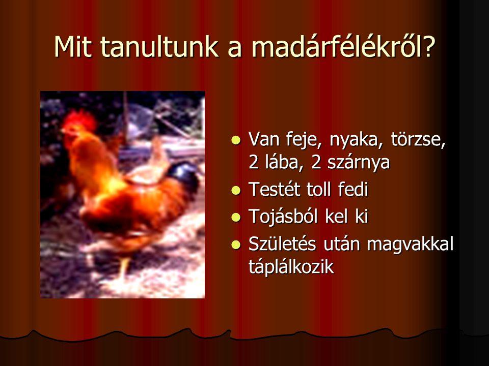 Mit tanultunk a madárfélékről? Van feje, nyaka, törzse, 2 lába, 2 szárnya Van feje, nyaka, törzse, 2 lába, 2 szárnya Testét toll fedi Testét toll fedi