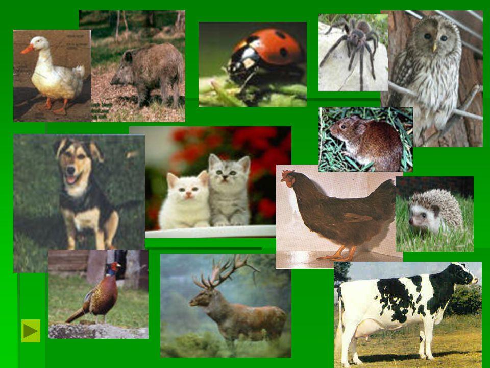 Gyakorlatok - szárny, farok, szőr, 2 láb, elevenszülő, magvakkal táplálkozik, 4 láb, anyatejjel táplálkozik, tojásból kel ki, törzs emlősmadárféle 1.