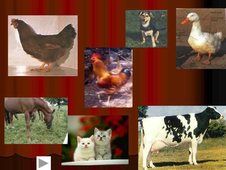 Mit tanultunk a madárfélékről.