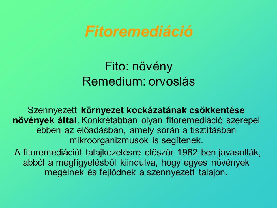 Fitoremediáció Fito: növény Remedium: orvoslás Szennyezett környezet kockázatának csökkentése növények által. Konkrétabban olyan fitoremediáció szerep