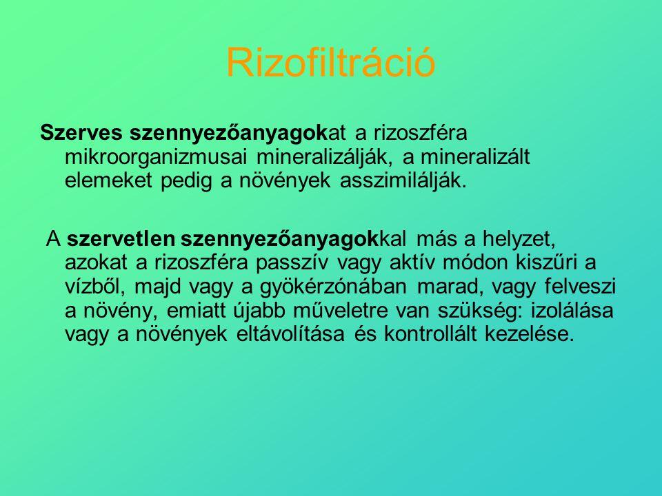 Rizofiltráció Szerves szennyezőanyagokat a rizoszféra mikroorganizmusai mineralizálják, a mineralizált elemeket pedig a növények asszimilálják. A szer