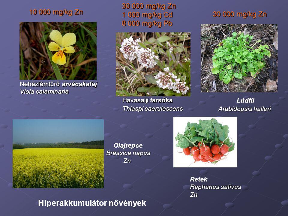 A fém hiperakkumulációra képes vadon előforduló növényfajok nemzetségei (pl.
