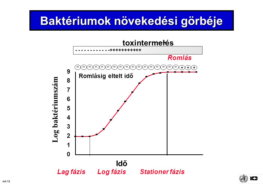 mh 12 Baktériumok növekedési görbéje toxintermelés + _ ++ ________________ - - - - - - - - - - - -+++++++++++ Romlásig eltelt idő Idő 0 1 2 3 4 5 6 7