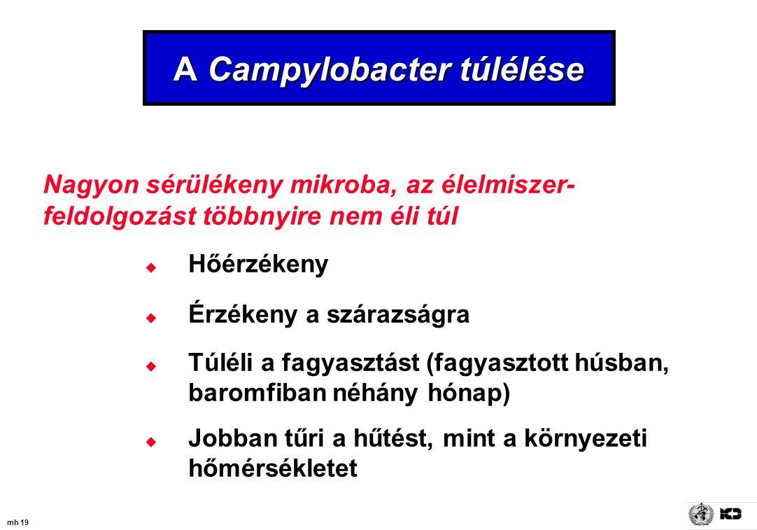 mh 19 A Campylobacter túlélése Nagyon sérülékeny mikroba, az élelmiszer- feldolgozást többnyire nem éli túl  Hőérzékeny  Érzékeny a szárazságra  Tú