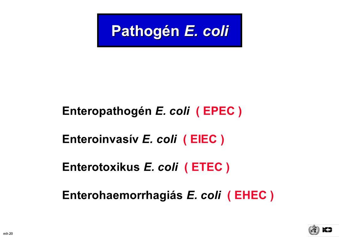 mh 20 Pathogén E. coli Enteropathogén E. coli ( EPEC ) Enteroinvasív E. coli ( EIEC ) Enterotoxikus E. coli ( ETEC ) Enterohaemorrhagiás E. coli ( EHE