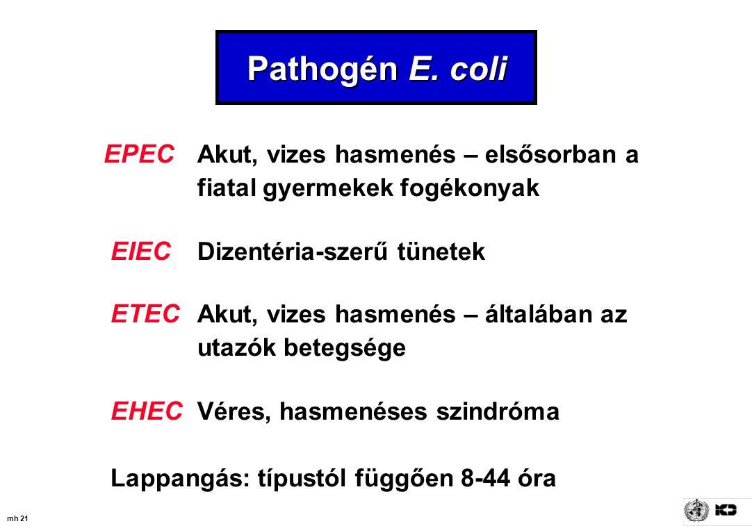 mh 21 Pathogén E. coli EPEC Akut, vizes hasmenés – elsősorban a fiatal gyermekek fogékonyak EIEC Dizentéria-szerű tünetek ETEC Akut, vizes hasmenés –
