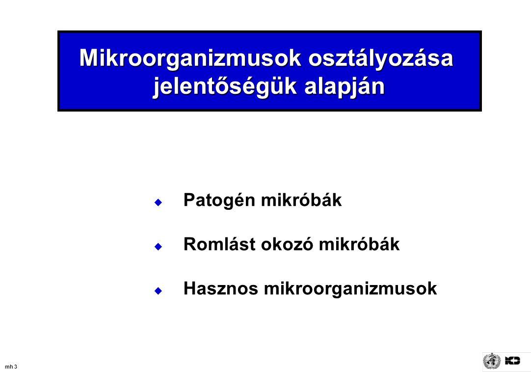 mh 34 Min.toxikus dózis (sejt / g) S. aureus10 6 C.