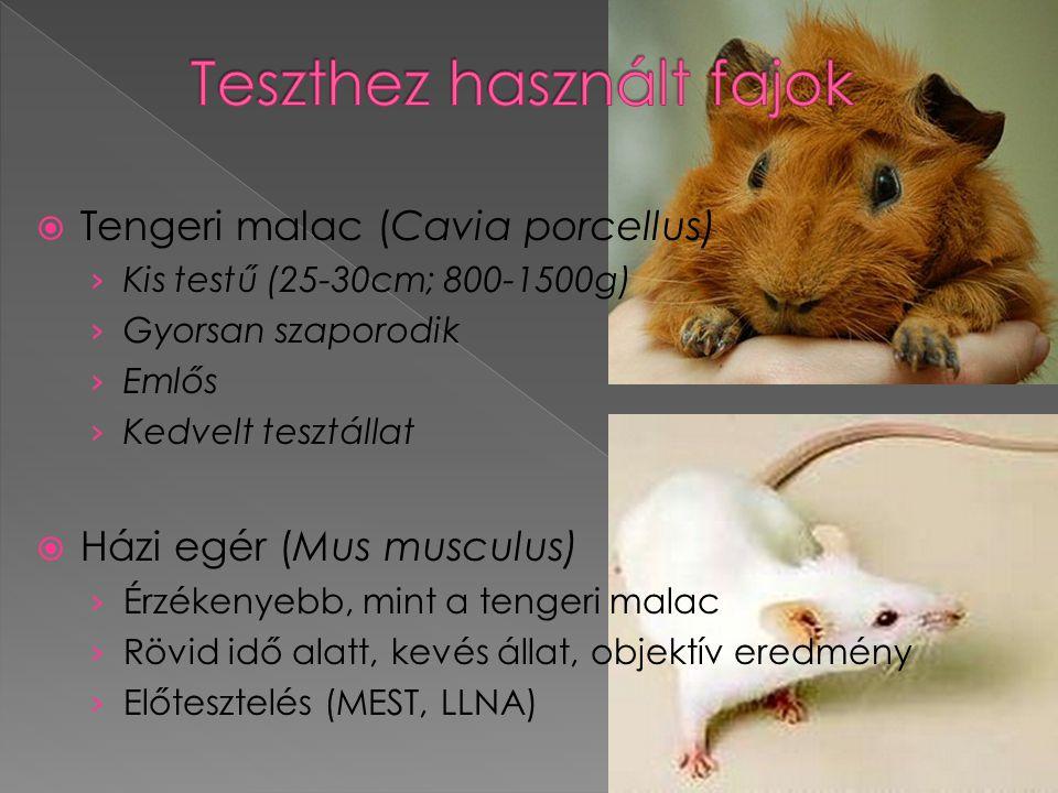 Tengeri malac (Cavia porcellus) › Kis testű (25-30cm; 800-1500g) › Gyorsan szaporodik › Emlős › Kedvelt tesztállat  Házi egér (Mus musculus) › Érzé