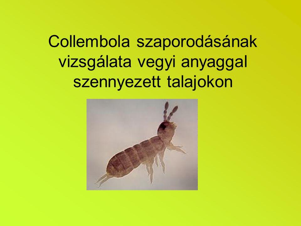 Bevezetés A vizsgálat célja, annak meghatározása, hogy szennyezett talaj hogyan befolyásolja a collembola (ugróvillások) szaporodási képességét Az ugróvillások ökológiailag fontos fajok a talaj szennyezettségének meghatározásánál.