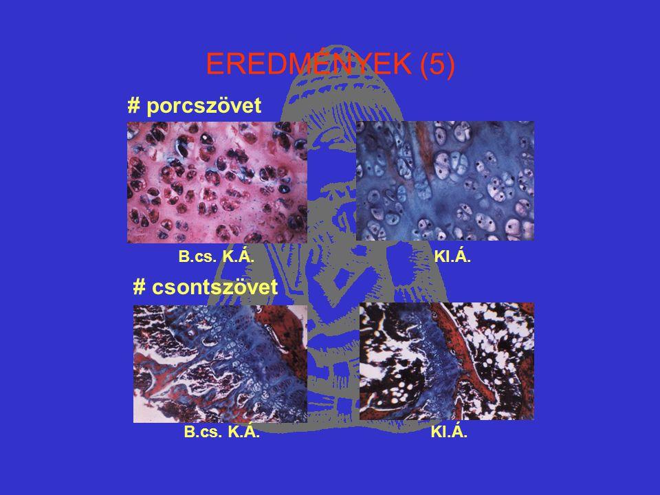 EREDMÉNYEK (5) # porcszövet B.cs. K.Á. KI.Á. # csontszövet B.cs. K.Á. KI.Á.