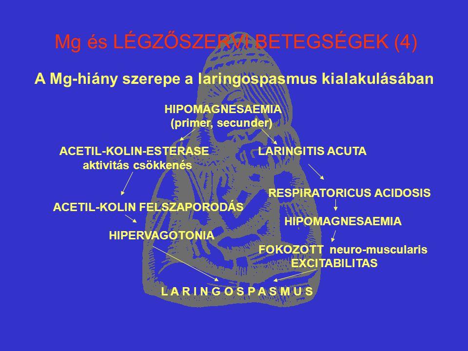 Mg és LÉGZŐSZERVI BETEGSÉGEK (4) A Mg-hiány szerepe a laringospasmus kialakulásában HIPOMAGNESAEMIA (primer, secunder) ACETIL-KOLIN-ESTERASE LARINGITI