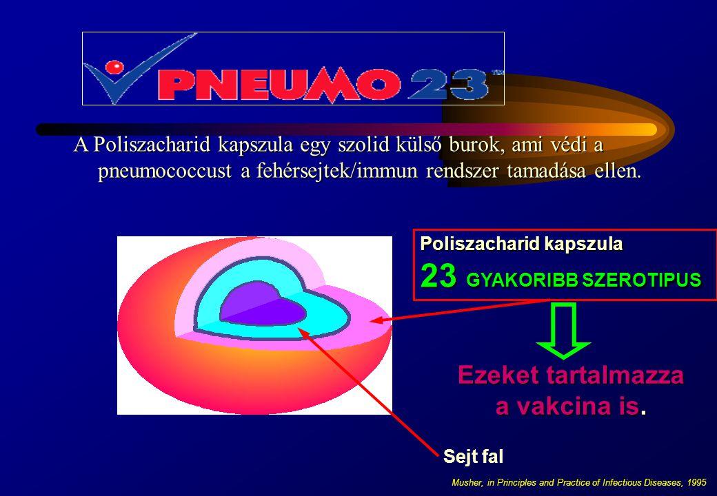 A Poliszacharid kapszula egy szolid külső burok, ami védi a pneumococcust a fehérsejtek/immun rendszer tamadása ellen. Poliszacharid kapszula 23 GYAKO