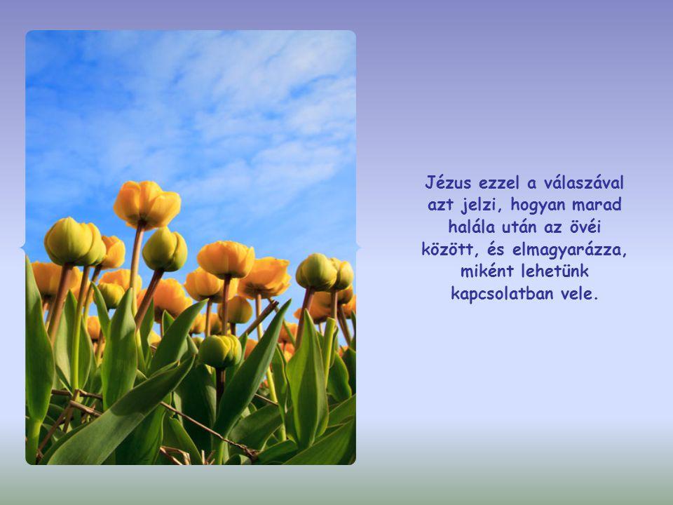 Jézus ezzel a válaszával azt jelzi, hogyan marad halála után az övéi között, és elmagyarázza, miként lehetünk kapcsolatban vele.