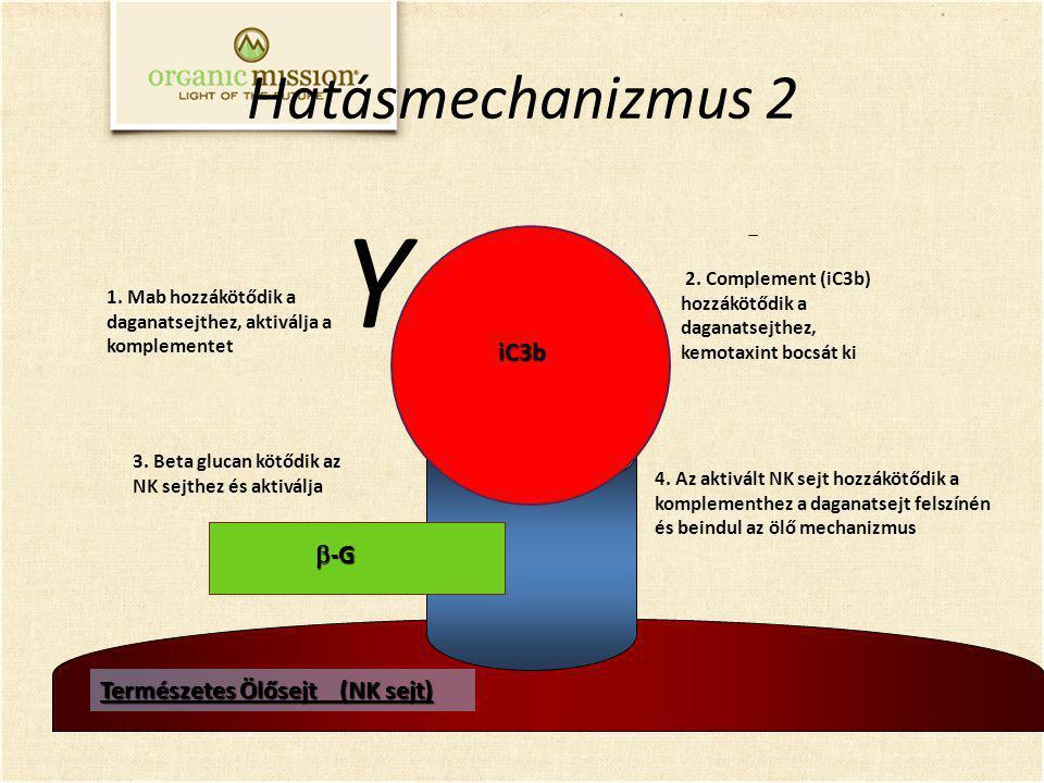 3. Beta glucan kötődik az NK sejthez és aktiválja 2. Complement (iC3b) hozzákötődik a daganatsejthez, kemotaxint bocsát ki 1. Mab hozzákötődik a dagan