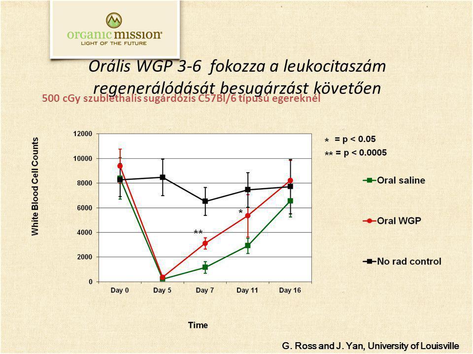 Orális WGP 3-6 fokozza a leukocitaszám regenerálódását besugárzást követően G. Ross and J. Yan, University of Louisville 500 cGy szublethalis sugárdóz