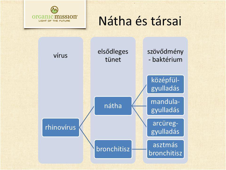 Nátha és társai szövődmény - baktérium elsődleges tünet vírus rhinovírusnátha középfül- gyulladás mandula- gyulladás arcüreg- gyulladás bronchitisz as