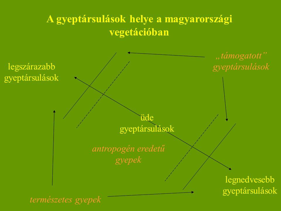 """A gyeptársulások helye a magyarországi vegetációban legszárazabb gyeptársulások legnedvesebb gyeptársulások üde gyeptársulások természetes gyepek """"tám"""