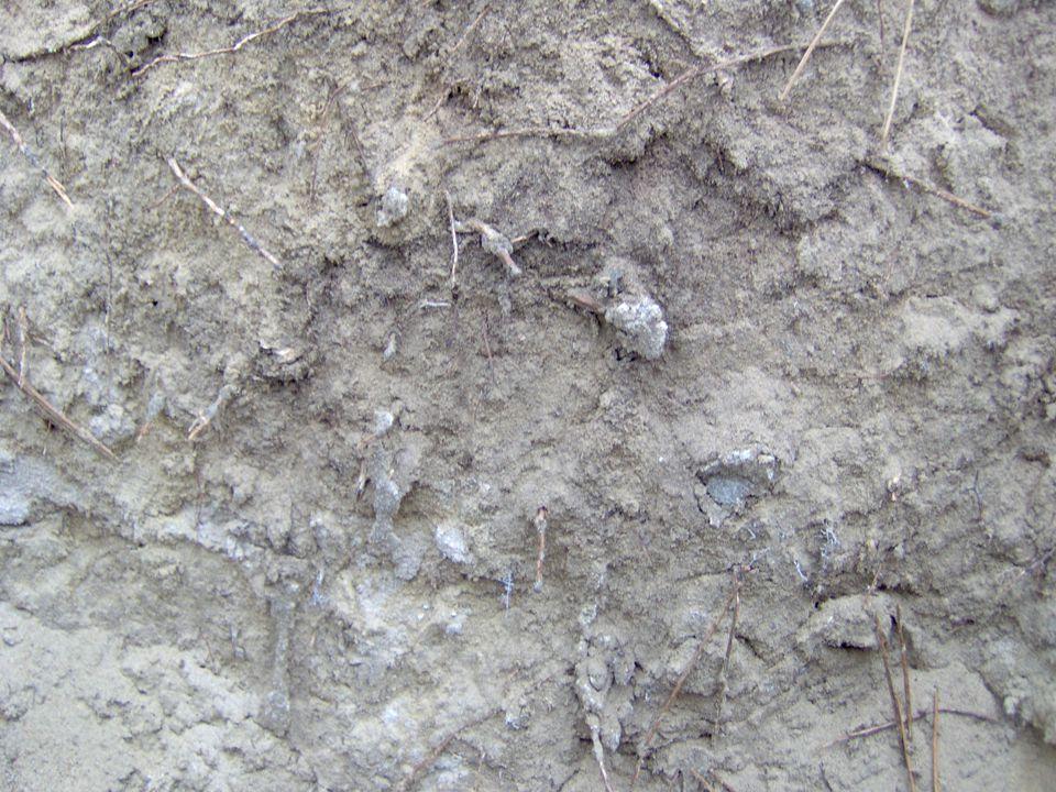 Védekezési javaslatok  Megelőző védekezés az előhasználatok számának minimálisra csökkentésével  A fertőzött állományban a pusztuló folt elhatárolása szegélyvédekező módszerrel  A fertőzött területen az állomány véghasználata után felújítás fafajcserével