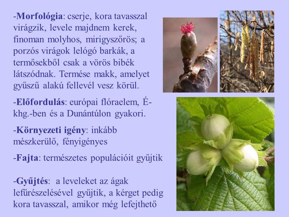 -Morfológia: cserje, kora tavasszal virágzik, levele majdnem kerek, finoman molyhos, mirigyszőrös; a porzós virágok lelógó barkák, a termősekből csak