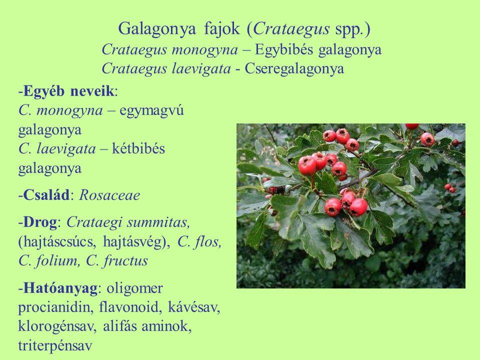 Galagonya fajok (Crataegus spp.) -Egyéb neveik: C. monogyna – egymagvú galagonya C. laevigata – kétbibés galagonya -Család: Rosaceae -Drog: Crataegi s