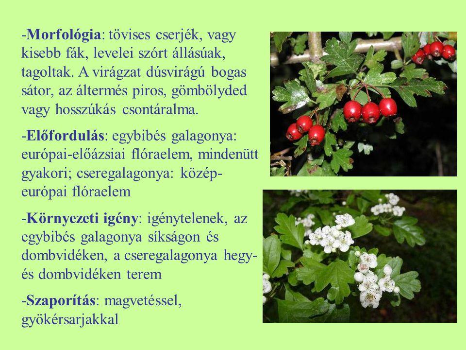 -Morfológia: tövises cserjék, vagy kisebb fák, levelei szórt állásúak, tagoltak. A virágzat dúsvirágú bogas sátor, az áltermés piros, gömbölyded vagy