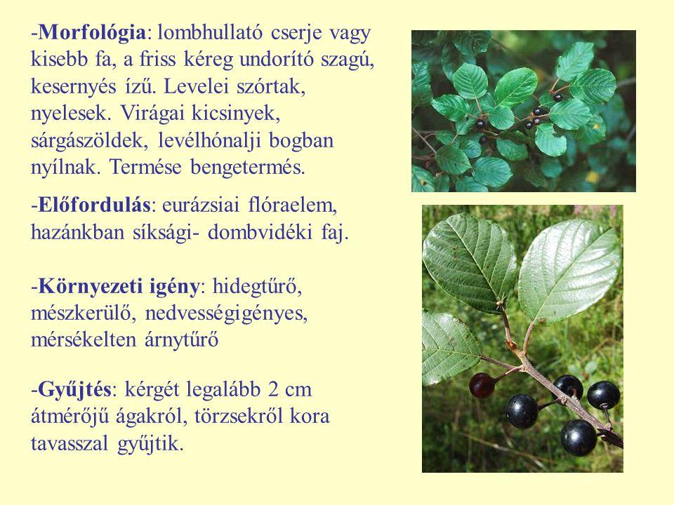 -Morfológia: lombhullató cserje vagy kisebb fa, a friss kéreg undorító szagú, kesernyés ízű. Levelei szórtak, nyelesek. Virágai kicsinyek, sárgászölde