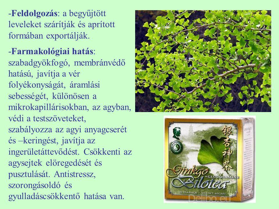 -Feldolgozás: a begyűjtött leveleket szárítják és aprított formában exportálják. -Farmakológiai hatás: szabadgyökfogó, membránvédő hatású, javítja a v