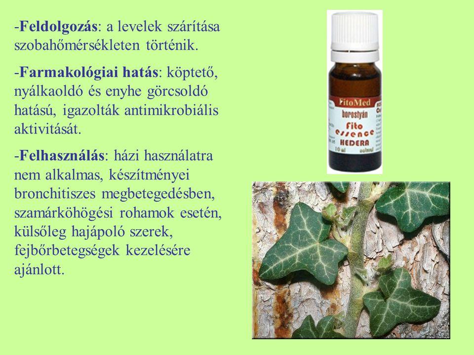 -Feldolgozás: a levelek szárítása szobahőmérsékleten történik. -Farmakológiai hatás: köptető, nyálkaoldó és enyhe görcsoldó hatású, igazolták antimikr
