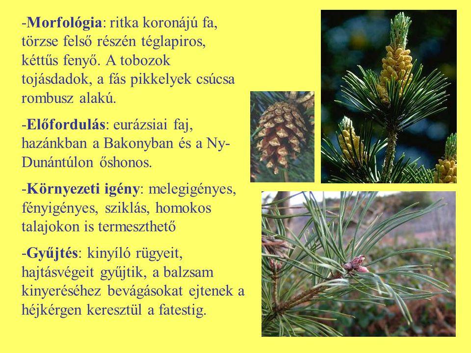 -Morfológia: ritka koronájú fa, törzse felső részén téglapiros, kéttűs fenyő. A tobozok tojásdadok, a fás pikkelyek csúcsa rombusz alakú. -Előfordulás