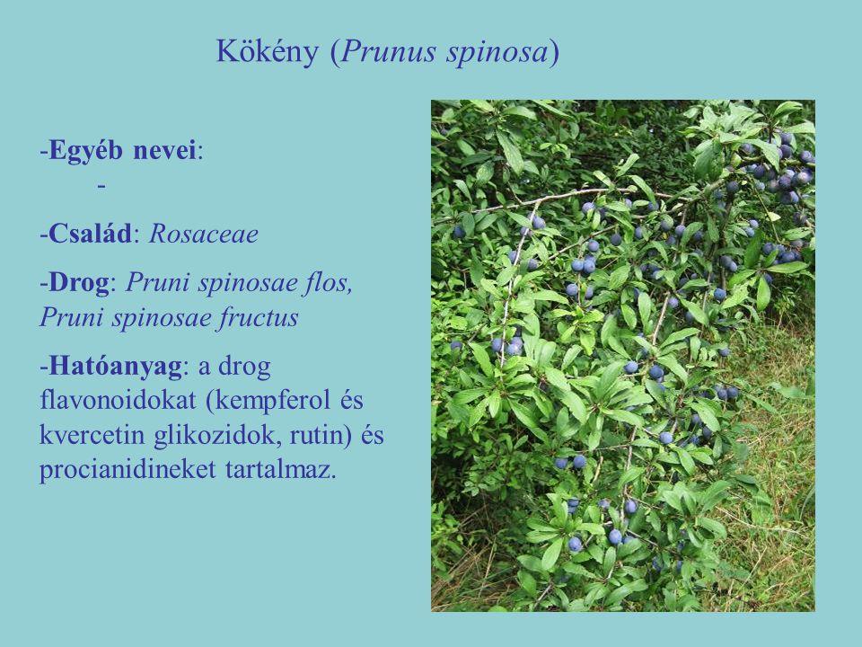 Kökény (Prunus spinosa) -Egyéb nevei: - -Család: Rosaceae -Drog: Pruni spinosae flos, Pruni spinosae fructus -Hatóanyag: a drog flavonoidokat (kempfer
