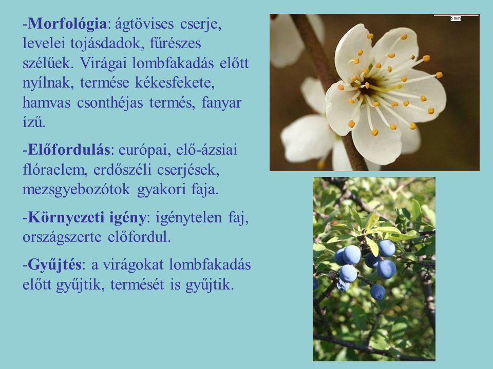 -Morfológia: ágtövises cserje, levelei tojásdadok, fűrészes szélűek. Virágai lombfakadás előtt nyílnak, termése kékesfekete, hamvas csonthéjas termés,