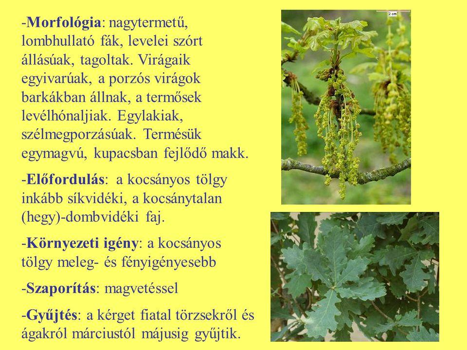 -Morfológia: nagytermetű, lombhullató fák, levelei szórt állásúak, tagoltak. Virágaik egyivarúak, a porzós virágok barkákban állnak, a termősek levélh