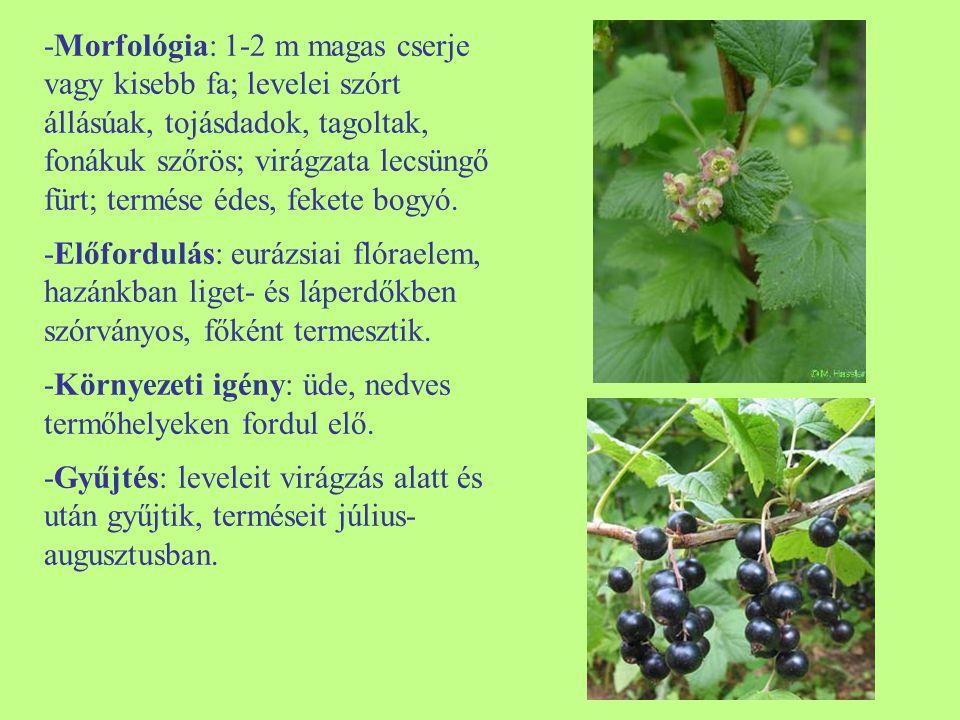 -Morfológia: 1-2 m magas cserje vagy kisebb fa; levelei szórt állásúak, tojásdadok, tagoltak, fonákuk szőrös; virágzata lecsüngő fürt; termése édes, f