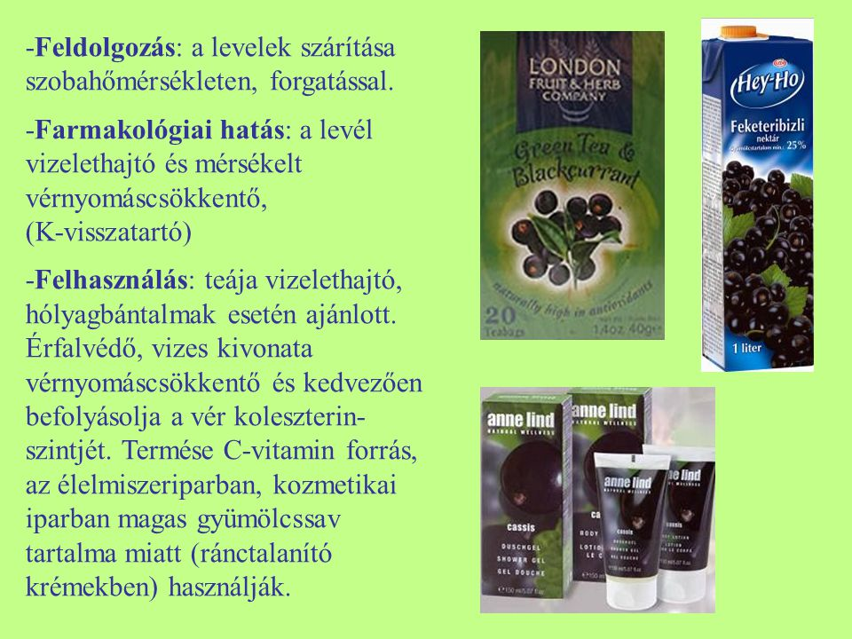 -Feldolgozás: a levelek szárítása szobahőmérsékleten, forgatással. -Farmakológiai hatás: a levél vizelethajtó és mérsékelt vérnyomáscsökkentő, (K-viss
