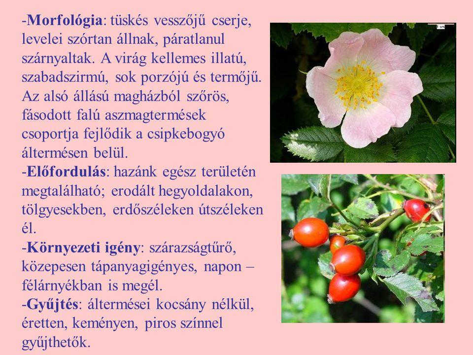 -Morfológia: tüskés vesszőjű cserje, levelei szórtan állnak, páratlanul szárnyaltak. A virág kellemes illatú, szabadszirmú, sok porzójú és termőjű. Az