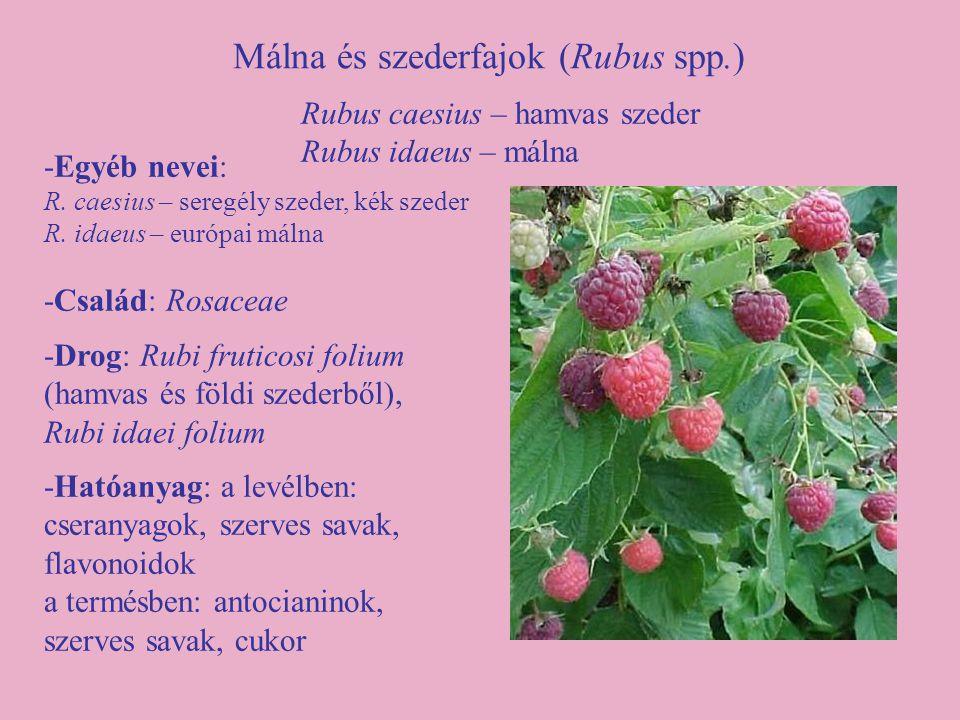 Málna és szederfajok (Rubus spp.) -Egyéb nevei: R. caesius – seregély szeder, kék szeder R. idaeus – európai málna -Család: Rosaceae -Drog: Rubi fruti