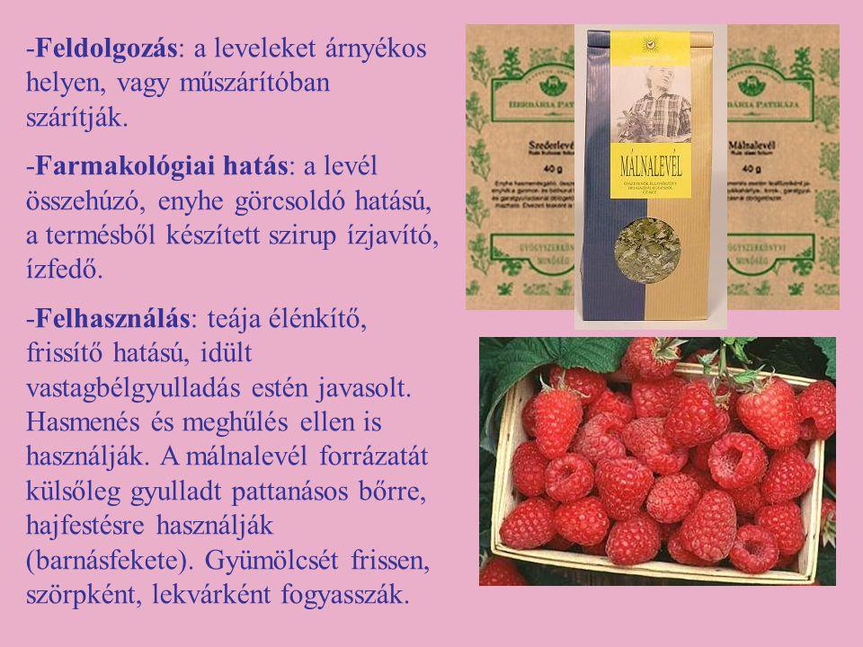 -Feldolgozás: a leveleket árnyékos helyen, vagy műszárítóban szárítják. -Farmakológiai hatás: a levél összehúzó, enyhe görcsoldó hatású, a termésből k