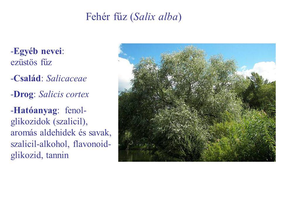 Fehér fűz (Salix alba) -Egyéb nevei: ezüstös fűz -Család: Salicaceae -Drog: Salicis cortex -Hatóanyag: fenol- glikozidok (szalicil), aromás aldehidek