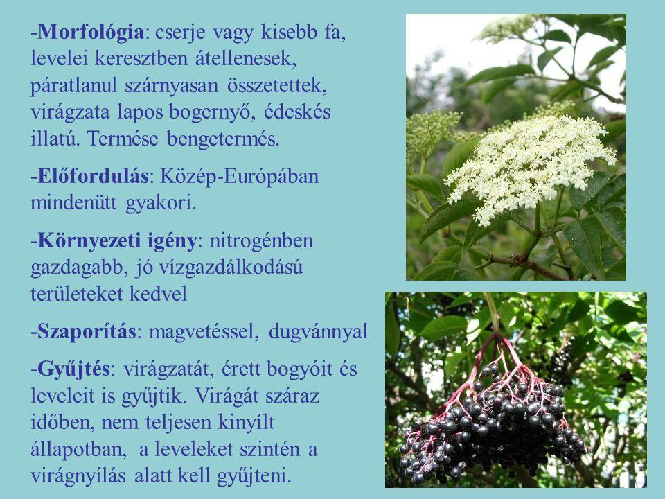 -Morfológia: cserje vagy kisebb fa, levelei keresztben átellenesek, páratlanul szárnyasan összetettek, virágzata lapos bogernyő, édeskés illatú. Termé