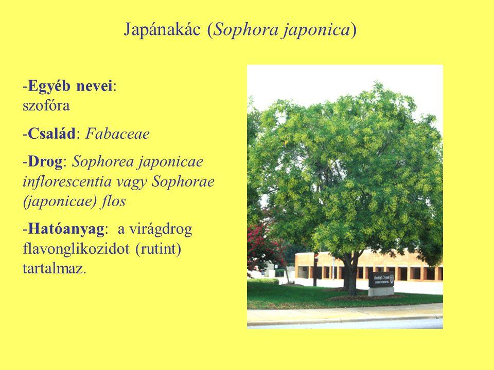 Japánakác (Sophora japonica) -Egyéb nevei: szofóra -Család: Fabaceae -Drog: Sophorea japonicae inflorescentia vagy Sophorae (japonicae) flos -Hatóanya