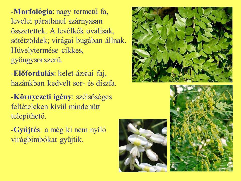 -Morfológia: nagy termetű fa, levelei páratlanul szárnyasan összetettek. A levélkék oválisak, sötétzöldek; virágai bugában állnak. Hüvelytermése cikke