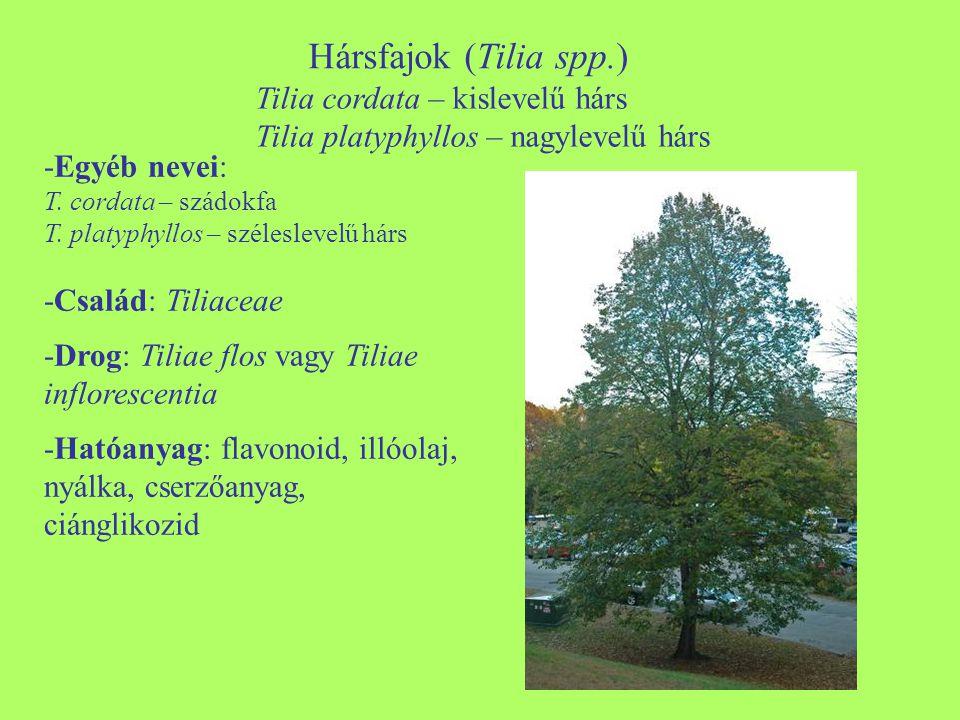 Hársfajok (Tilia spp.) -Egyéb nevei: T. cordata – szádokfa T. platyphyllos – széleslevelű hárs -Család: Tiliaceae -Drog: Tiliae flos vagy Tiliae inflo