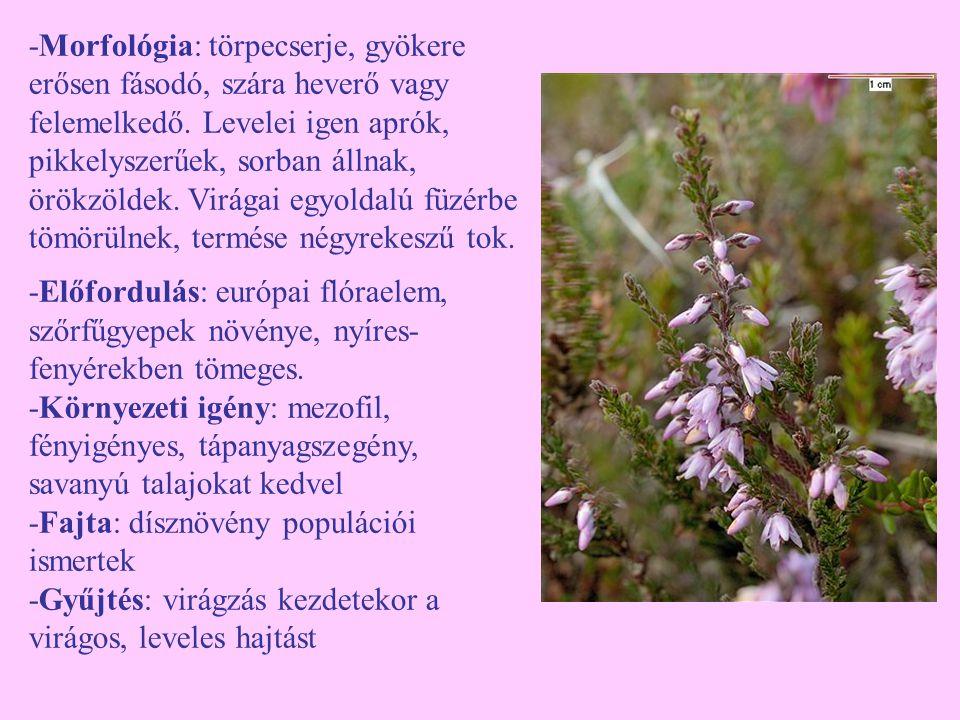 -Morfológia: törpecserje, gyökere erősen fásodó, szára heverő vagy felemelkedő. Levelei igen aprók, pikkelyszerűek, sorban állnak, örökzöldek. Virágai