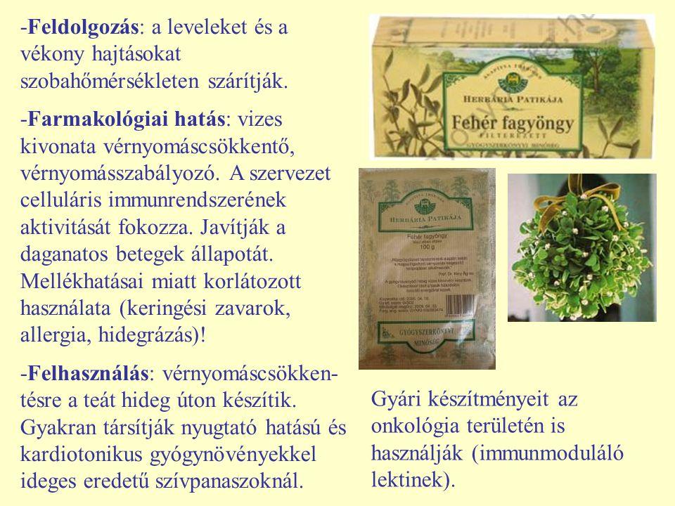 -Feldolgozás: a leveleket és a vékony hajtásokat szobahőmérsékleten szárítják. -Farmakológiai hatás: vizes kivonata vérnyomáscsökkentő, vérnyomásszabá