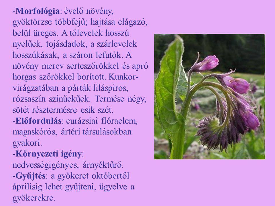 -Morfológia: évelő növény, gyöktörzse többfejű; hajtása elágazó, belül üreges. A tőlevelek hosszú nyelűek, tojásdadok, a szárlevelek hosszúkásak, a sz